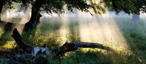 Licht – ein wichtiger Steuerungsfaktor für  Schlaf, Stimmung und Lebensenergie