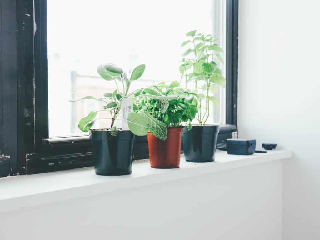 k chenkr uter als gesundheitselixier einfach gesund schlafen das schlaf magazin. Black Bedroom Furniture Sets. Home Design Ideas