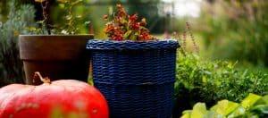 Gartenarbeit zur Vorbeugung von Rückenschmerzen und Schlafstörungen
